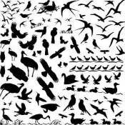 Birds Glass Decal