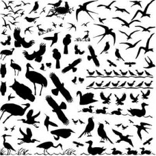 Birds Glass Decal