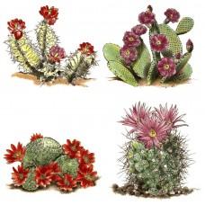 K-Ceramics decal 15350 - Cactus set