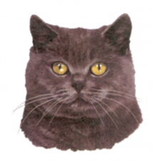 """Cat Decal, Select Breed - 3"""" (No Background)"""