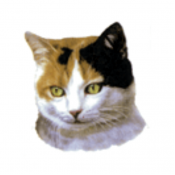 "Cat Decal, Select Breed - 1.5"" (No Background)"