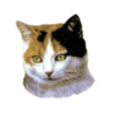 "Cat Decal, Select Breed - 1"" (No Background)"