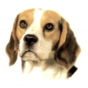 "Dog Decal, Select Breed - 1"" (No Background)"