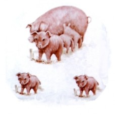 Virma 1180 Sow and piglets Decal