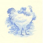 Virma decal 1740 Size D - Chickens (2 sheets: buy 1, get 1 free!)