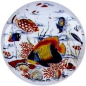 Virma decal 1956 - Tropical Fish