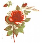 Virma decal 1006-R - Red Rose