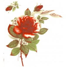 Virma 1006-R Red Rose Decal