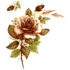 Virma decal 1006-P - Pink Rose