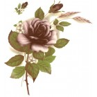 Virma decal 1006-B - Burgundy Color Rose