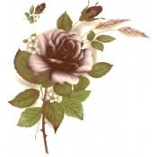 Virma decal 1006-B - Burgundy Color Rose