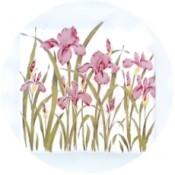 Virma decal 1296-Pink Flowers