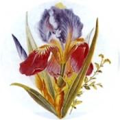 Virma decal 1316-Blue/Purple Flowers