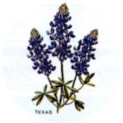 Virma decal 1532- Texas Blue Bell Flowers