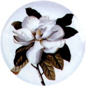 Virma decal 1924-White Flowers