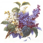 Virma decal 1318-lilacs, blue and white