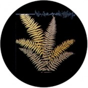Virma decal 1138- Gold Ferns