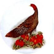 Virma decal 1170-Turkey