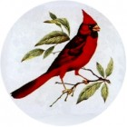 Virma decal 1188- Cardinal