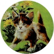 Virma decal 1680 - Excited Kitten