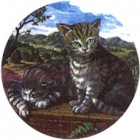Virma decal 2286 - Cat Set