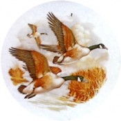 Virma decal 1012-Canadian Geese/Mallard Ducks
