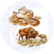 Virma decal 1064-Woodland Animals