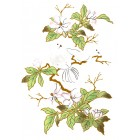 Virma decal 1152-Doves on Flowery Branch