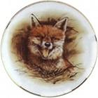 Virma decal 2170- Fox