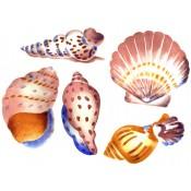 Zembillas decal 0772 - Sea Shells