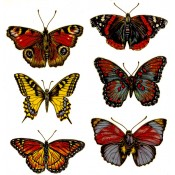 Zembillas decal 0096 - Butterflies 2