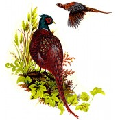 Zembillas decal 0685 - Pheasants (2 sheets: buy 1, get 1 free!)