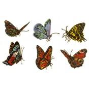 Zembillas decal 0802 - Butterflies