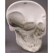 Skull Dish Mold